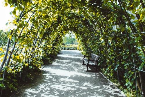 Optez pour la brande de bruyère pour la clôture de votre jardin!
